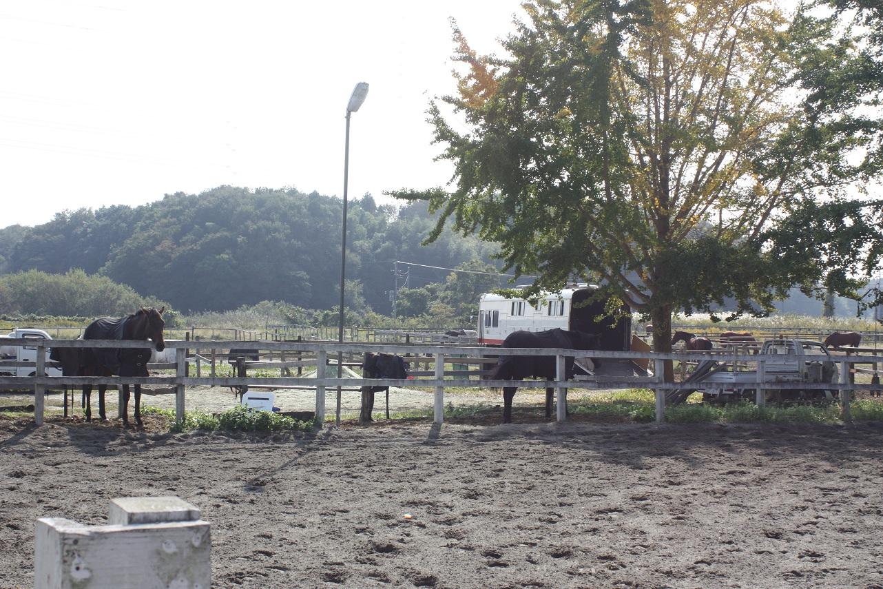 守谷 乗馬 クラブ